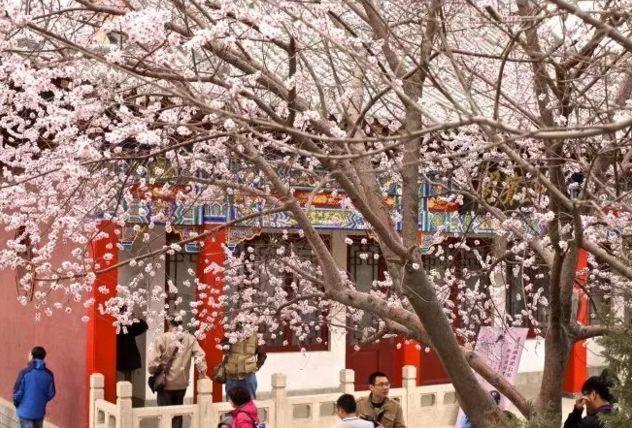 天津市桃花堤在哪_清明节不出城?收好这份天津最佳赏花地点大全